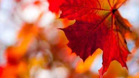 Prière pour l'automne