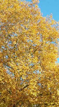 automne-ciel-lourdes-une